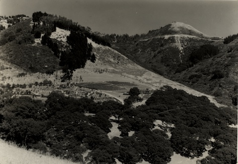 Photo retake of MVZ Img 7051, Strawberry Canyon, Berkeley, CA , 1935 July 26, Stuart Wood Grinnell, MVZ Img 7083.